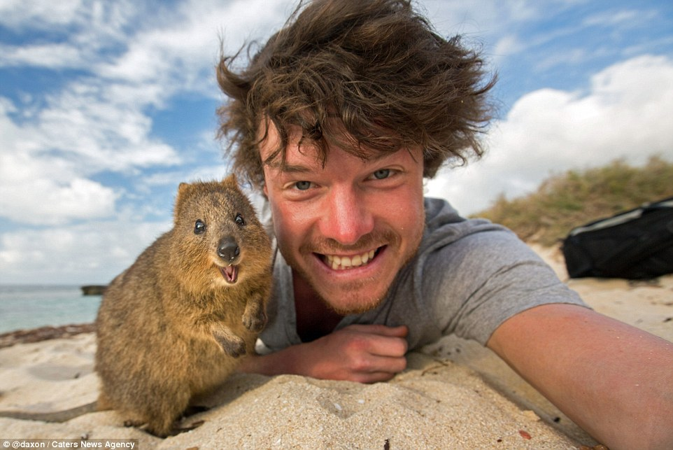 2F911A0900000578-3370281-Allan Dixon takes a selfie with an excitable quokka who looks ov-a-1 1450800213972