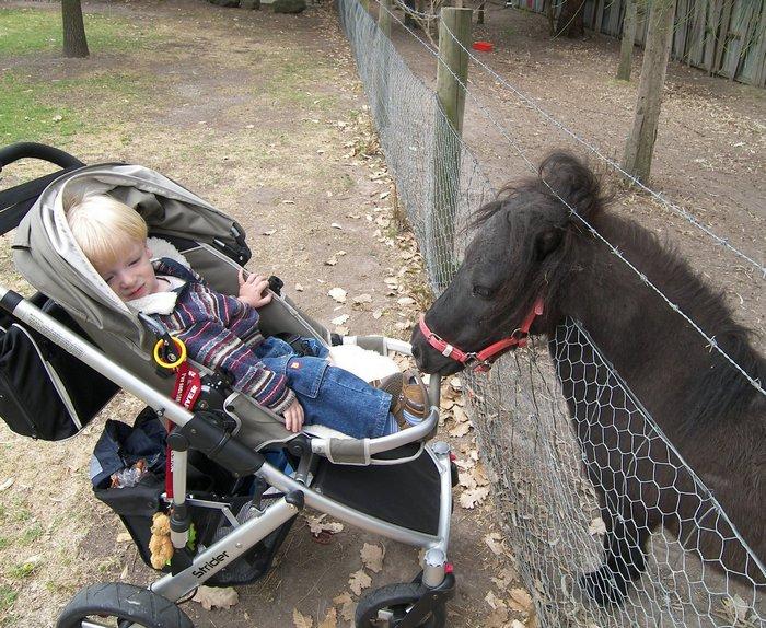 Детская ферма животных рядом с Мельбурном (Myuna Farm)