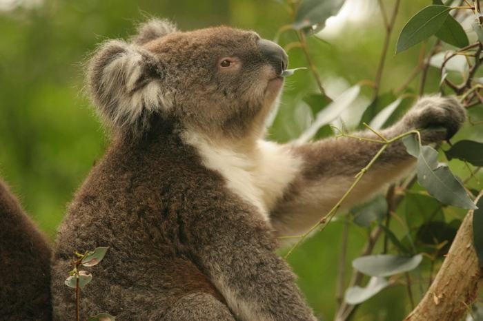 Заповедник Хилсвилл в Мельбурне (Healesville Sanctuary)