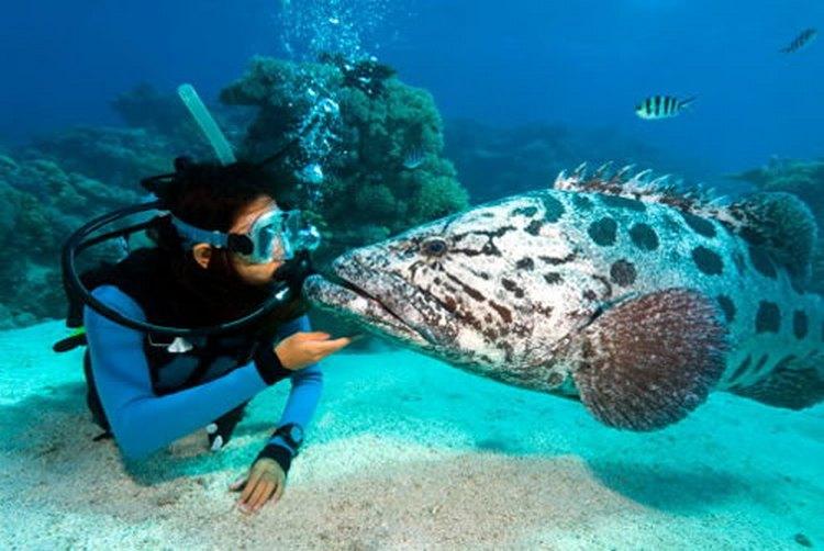 Настоящей меккой для поклонников дайвинга является Большой Барьерный Риф