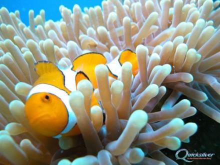 Однодневный круиз на паруснике Wavedancer к коралловым островам Лоу Айлс (из Порт Дугласа) - CRCR3